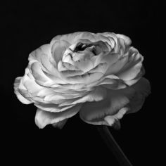 Photography Flowers Art Photography Black And White White And ...