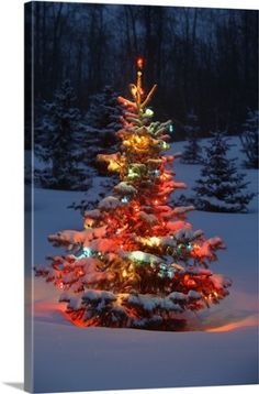 carson ganci premium thick wrap canvas wall art print entitled christmas tree with lights outdoors in the forest none