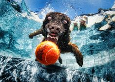 underwater-photos-of-dogs-fetching-their-balls-by-seth-casteel