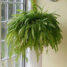 Растения для тёмных помещений - plantatravel