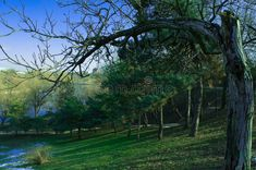 Photo about The view of the best and beautiful park from Bucharest. Image of deciduous, vegetation, forest - 66724103