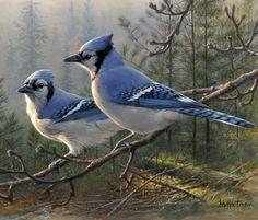 Blue Jay Pair painting by Joe Hautman