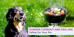 Want To Make Your #Dog A Part Of #Summer Cookouts? Take A Look At The Safety #Tips To Protect Him -