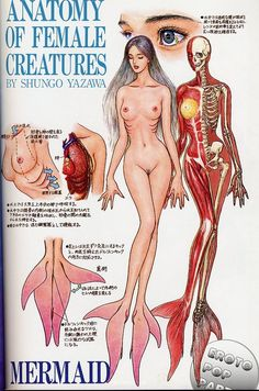 Anatomy of Female Creatures By Shungo Yazawa ★ || CHARACTER DESIGN REFERENCES…