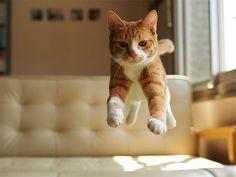 cats gatos humor Cultura Inquieta12