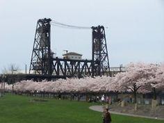 cherry blossom bliss!