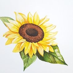 I'm having trouble with enteritis all week. Mini Paintings, Watercolor Paintings, Tattoo Girasoles, Advantages Of Watermelon, All Vegetables, Drawing Lessons, Watercolor Illustration, Watercolor Flowers, Adult Coloring