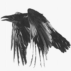 raven_400x400.gif (400×400)