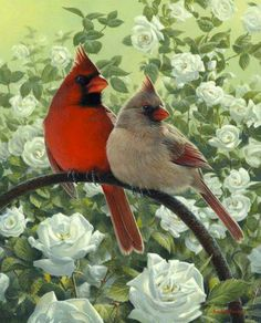Birds & Blooms.  ♡ Spring !