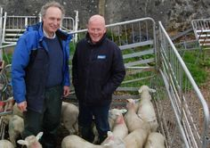 Increasing numbers of local sheep farmers are confirming that coccidiosis is now a management challenge that they must deal with as a matter of routine.