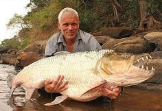 21 of the freakiest fish caught on 'River Monsters' All of these were caught by Jeremy Wade, the silver-fox madman who hosts River Monsters on Animal Planet. And, yes, he releases everything he catches. Jeremy Wade, John Wade, Rio Congo, Tiger Fish, Wading River, Congo River, River Monsters, Giant Fish, Monster Fishing