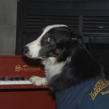 Leroy starred as a toy piano player on the David Letterman Show. Any requests from the audience? David Letterman Show, Piano Player, Toy, Stars, Gallery, Animals, Animales, Animaux, Toys