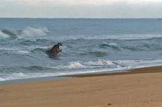 לא רק ים וחול: החופים המוזרים בעולם