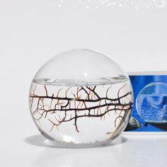 EcoSphere Closed Aquatic Ecosystem, Small Sphere