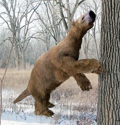Facts About the Giant Ground Sloth #Science #iNewsPhoto