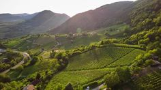 vineyards of northwest Croatia   Hrvatsko zagorje