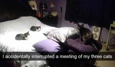 40 Funny Animal Pictures – Funnyfoto | Funny Pictures - Videos - Gifs - Page 25