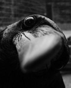 Curious crow…