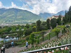 I Giardini di Castel Trauttmansdorff (Merano) - 2020 All You Need to Know BEFORE You Go (with Photos) - Tripadvisor Castle Gardens, South Tyrol, Trip Advisor, Skiing, Mountains, Travel, Beautiful, Ski, Viajes