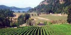 Saturna Island Vineyard