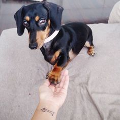 25+ Of The Best Dog Tattoo Ideas Ever