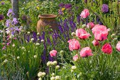 A Stunning Perennial Planting Idea with Oriental Poppies, Irises, Alliums and Sage - Jardins Sans Secret