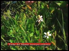 How To Choose The Right Plants For A Medicinal Herb Garden