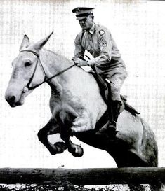 Jumping mules! In 1949 US Army mule Hambone was kicked out of jumping competitions at horse shows. He actually won once, but had to return his ribbons due to pressure from horse owners.