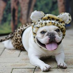 Chalky the Cheetah