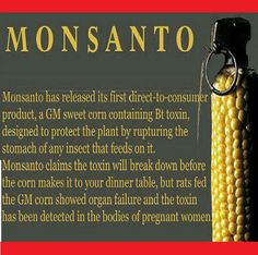 Don't eat the sweet corn. If it doesn't say it's non-GMO, then it is. Just so you know. Also corn is in just about everything processed. Jesse Ventura, Human Embryo, Bon Courage, Genetically Modified Food, Toxic Foods, Thing 1, Bad Food, Healing Herbs, Sweet Corn
