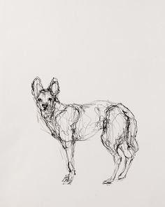 """Coyote, Ink on Paper, 11"""" x 15.5"""", 2013"""