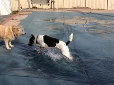 Trip and I moved back to NJ. I think his favorite part is our pool. It doesn't really matter that it's not open yet.