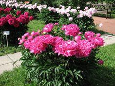 Princess Margaret, Floral Wreath, Wreaths, Plants, Decor, Gardening, Jewelry, Garden, Diet
