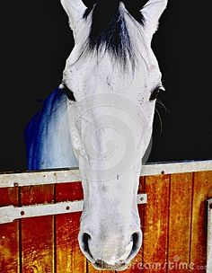 The horse is one of two extant subspecies of Equus ferus.
