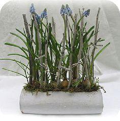 Bloemstukjes maken met soorten bloembollen die op klei kunnen worden gezet zoals blauwe druifjes of Muscari