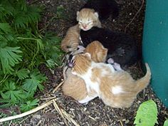 During kitten season, it's not unusual to discover a nest of unattended kittens or a single kitten seemingly abandoned by his/her mother. (Photo by Ken Hanly)