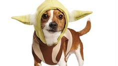 An easy costume to throw on your dog to celebrate May the  sc 1 st  Pinterest : yoda dog costume pug  - Germanpascual.Com