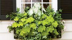 Charleston, South Carolina horticulturist Tracee Lund of Potted Pleasures creates a light color palette with 'Aaron' white caladium, 'Key Lime Pie' heuchera, 'White