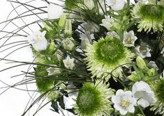 Green Chrysanthemums ( Anastasia Green) and White Campanula.  www.bloomycreations.nl  @Bloomy Creations.nl