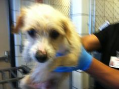 35520295 located in El Paso, TX has 21 days Left to Live. Adopt him now!