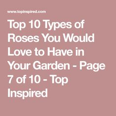 Top 10 Types of Roses You Would Love to Have in Your Garden - Page 7 of 10 - Top Inspired