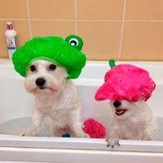 SOS Animal  com amor: Aprenda como dar banho a seco no seu pet