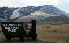 yellowstone national park - Google Search