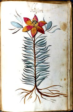 Bloemen en Cruydeboek, Manuscript (1554)