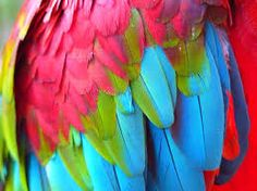Be who you are and say what you feel. Free Stock Photos, Free Photos, Parrot Image, Tropical Birds, Close Up, The Creator, How Are You Feeling, Feathers, Creema