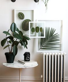 I'll spare you from a long story and just give you the short version – I recently had to cut off all the leaves from one of my calathea plants due to our apartment temperature getting b…