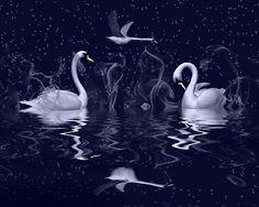"fantasy swan | Swan fantasy"" by Annika Strömgren | Redbubble"