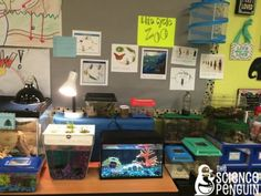 Crazy Organism Zoo-- We use these organisms for first-hand observations of all Life Science concepts we cover including ecosystem interdependency, comparing life cycles, traits and adaptations, food chains and the carbon dioxide-oxygen cycle.