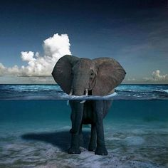 Great picture of animal and nature with this elephant viewed in and out of the water.