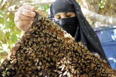 Afghanistan: Skills like bee-keeping empower vulnerable Afghan returnee women, who would otherwise not be able to make a living. © UNHCR/R.Arnold/September 2008